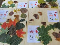 Fall Leaf Collages  Website full of ideas for autism and preschool