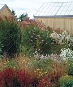 Designing with Grasses. Read the full story at http://www.finegardening.com/design/articles/designing-with-ornamental-grasses.aspx
