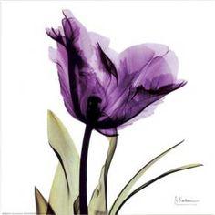 Art.com - Royal Purple Parrot Tulip Art Print