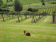 Gloucester winery