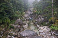 Creek in Yakusugi Grove in Yakushima, Japan