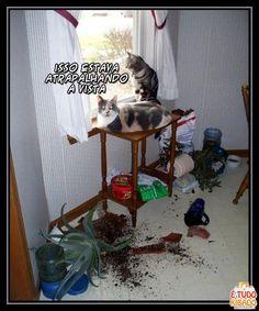 Mas também o povo deixa vasos na janela...tem dó, né?!