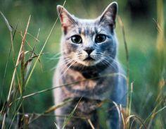 Can pets make you sick?