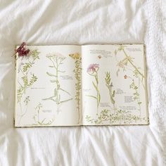 botanical prints and nature journals (gingerlillytea)