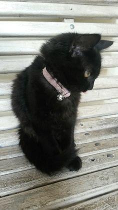 🐱my kitty Black 🐱