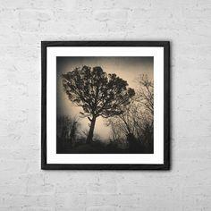 Deja Vu  Fine Art Photography  Tree by TaylanSoyturkFineArt
