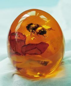 Bumble Bee in Amber.  Amber is an ancient manifestation tool that can help you attain your goals when you use it with focused attention.