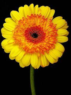 Bloomin' Mug Shot - Photograph at BetterPhoto.com
