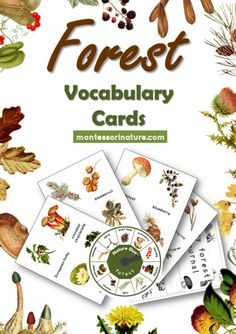 Forest Vocabulary Cards, Montessori 3-par cards, My Forest journal printable sheets. Montessori Nature Printable cards with gorgeous images.