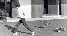 audrey hepburn & deer & dog