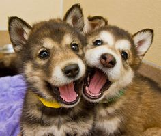 tierische freunde - animal friends ;-) #dog #dogs #funny #cute