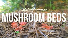 Outdoor Mushroom Beds- The Easiest Way to Grow Edible Mushrooms in Your Garden or Back Yard! Organic Wine, Grow Organic, Organic Fertilizer, Organic Gardening, Edible Mushrooms, Stuffed Mushrooms, Wild Honeysuckle, Giant Mushroom, Grove Farm