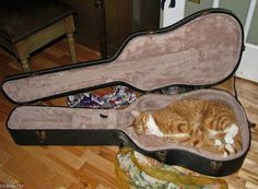 PetsLady's Pick: Funny Guitar Cat Of The Day ... see more at PetsLady.com ... The FUN site for Animal Lovers