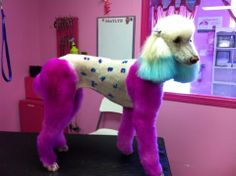 -Repinned-Dog hair dye grooming-by Sarah Gordon and Braylyn Cole from Canada.