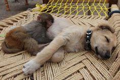Uyurken çok sevimli görünen 20 hayvan ♥♥♥