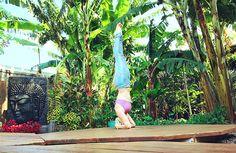Headstand  salamba sirsasana  with Devin Koppel  Yoga Teacher Training  Paia, Maui, Hawaii, Northshore