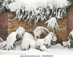 snow on the plant