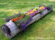 Log flower planter---this wound be cute along our patio to replace the current railroad tie.---JH