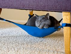 Cute idea for cat hammock. @aubrey Medlin @brooke Medlin