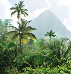 Caribbean, Saint Lucia Check out vibrant murals, zipline through the rainforest, hang with the locals and visit stunning beaches on this lush Caribbean island