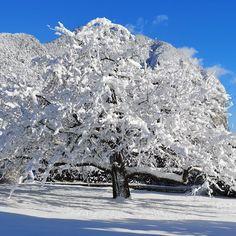 Ein genussvolles Wochenende mit diesem schönen Anblick. Der Apfelbaum in unserem Garten mit Schnee-Sahne-Häubchen. Genussvolle Grüße Diätologin Edburg Edlinger #edburgedlinger #diätologin #dietitian #genussmomente #schneezauber #geniessen Mount Everest, Mountains, Nature, Travel, Outdoor, Apple Tree, Healthy Lifestyle, Health And Wellbeing, Gain Muscle