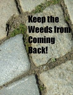 How to Keep Weeds from Coming Back