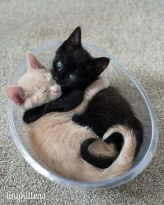 Let see of cat bath/wet cat, Cats are cute and cuddly animals. The independent nature of makes them an ideal choice as pets. Cute Baby Cats, Cute Cats And Kittens, Cute Little Animals, Cute Funny Animals, Kittens Cutest, Kitty Cats, Cat Hug, Fluffy Kittens, Tabby Cats