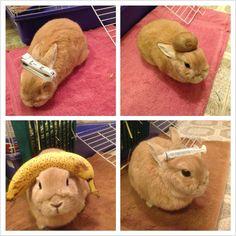 Stuff on my rabbit
