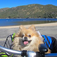 Do you bike with your dog at the campground? 🚌💕🐶#hilliard #atlanticbeach #whitesprings #fargo #waldo #callahan #kingsland #keystoneheights