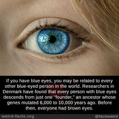 """If you have blue eyes, you may be related to every other blue-eyed person in the world. Researchers in Denmark have found that every person with blue eyes descends from just one """"founder,"""" an ancestor whose genes mutated 6,000 to 10,000 years ago...."""