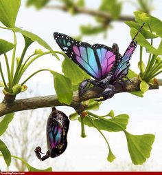 metamorphic...butterflies, that aren't butterflies at all... this world is always changing...