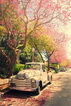 Rustic truck caught in pink blossoms