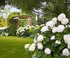 """White is an important color in the garden. It can be used to light up a shady area, imbue a space with a sense of calm, act as a neutral foil against other colors, and serve as an exclamation or focal point. White hydrangeas fill this need admirably. """"If you have no white in the garden, well, you are missing something,"""" says Nicholas Stadden, director of new plant introductions for Monrovia Growers. """"White is a pure, wonderfully refreshing color, not just in the garden, in a container on the…"""