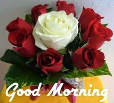 Good Morning Wishes With Rose - [Best HD Images] ~ Good morning inages Good Morning Flowers Pictures, Latest Good Morning Images, Good Morning Beautiful Flowers, Good Morning Nature, Good Morning Roses, Good Morning Beautiful Quotes, Good Morning Texts, Good Morning Photos, Good Morning Good Night