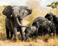Karoo National Park (Color Palate)