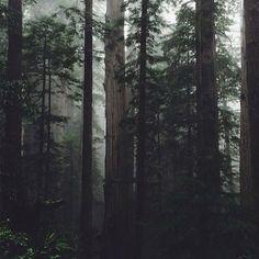 woods • @thoughtfulness
