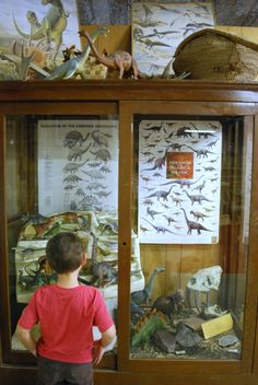 dino display - Jurupa Mountains Cultural Center