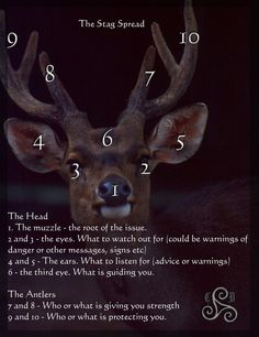 The Stag tarot spread by ~Celtic-Druidess