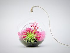"""Bliss Gardens Air Plant Terrarium Kit with 4"""" Round Glass / Pink Paradise"""