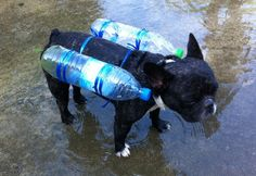http://petdiys.com/wp-content/uploads/2015/03/Plastic-Bottle-Dog-Floaties.jpg