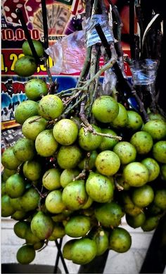 The best! These are Quenepas from Puerto Rico, otherwise known as JA: Guineps / Nica: Mamoncillo / Haiti: Quenepe / Dominican. Haitian Food Recipes, Jamaican Recipes, Recetas Puertorriqueñas, Comida Boricua, Trini Food, Puerto Rico Food, Puerto Rico History, Puerto Rican Culture, Puerto Rican Recipes