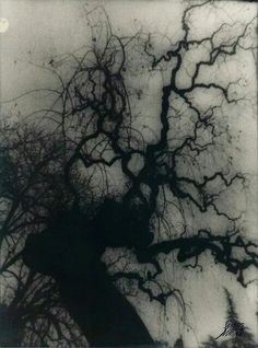 Wicked Occult, Haunted Tree, Spooky Trees, Darkness, Macabre, Google Brain, Mists, White Photography, Printmaking