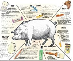 More then pork comes from pigs. Hog by-products infographic.