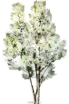 水彩风格的手绘树2