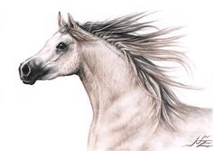 Araber Pferd - Fine Art Print A4 Pferd Zeichnung Kunstdruck