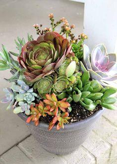 Houseplants for Better Sleep Thrifty Porch Decor Succulents In Containers, Container Flowers, Cacti And Succulents, Planting Succulents, Cactus Plants, Succulent Bowls, Succulent Centerpieces, Succulent Arrangements, Succulent Terrarium