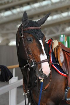The most important role of equestrian clothing is for security Although horses can be trained they can be unforeseeable when provoked. Riders are susceptible while riding and handling horses, espec… Cute Horses, Pretty Horses, Horse Love, Beautiful Horses, Equestrian Outfits, Equestrian Style, Dutch Warmblood, English Riding, Horse Girl