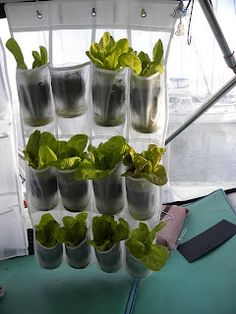 A simple way to build an onboard veggie garden -- a hanging shoe rack and a bunch of plastic milk or water bottles!