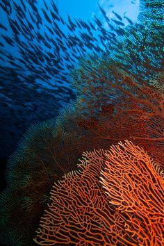 Thailandia coral
