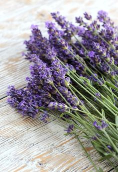 Adore English lavender as much as I do? Find out how to use this fragrant herb in recipes and more. Plus, get my best tips for growing and drying lavender. - English Lavender Recipes, Ideas & Tips - Satori Design for Living Lavender Garden, Lavender Fields, Lavender Flowers, Drying Lavender, Lavender Ideas, Purple Roses, Lavender Aesthetic, Flower Aesthetic, Lavender Recipes